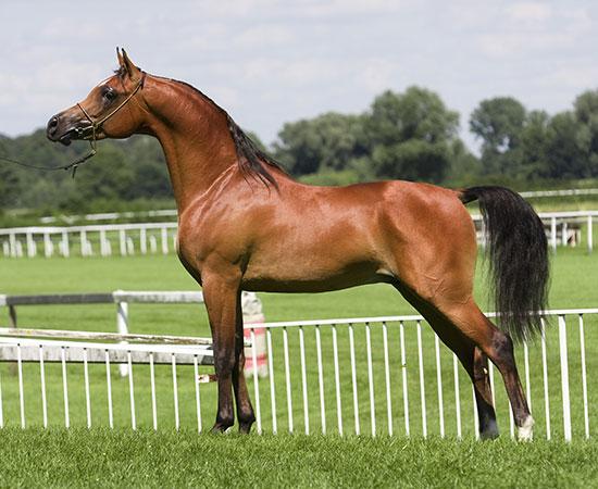 Gezond paard